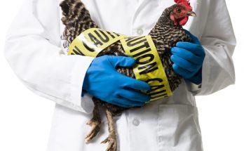 γρίπη των πουλερικών