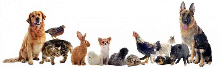 Ζώα συντροφιάς