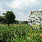 Η βιολογική γεωργία ανώτερη της συμβατικής