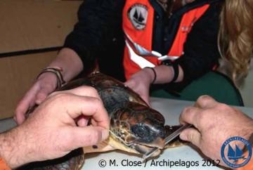 Διάσωση χελώνας