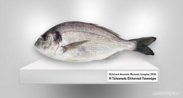 τι ψάρι τρως