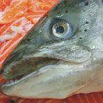 Το μεταλλαγμένο ψάρι τρώει το φυσικό
