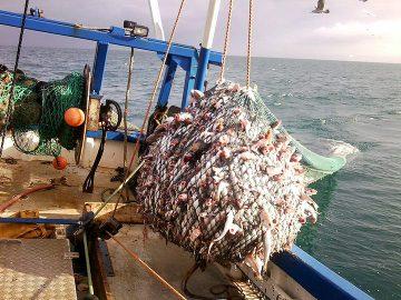 ψαρια μεσογειοσ